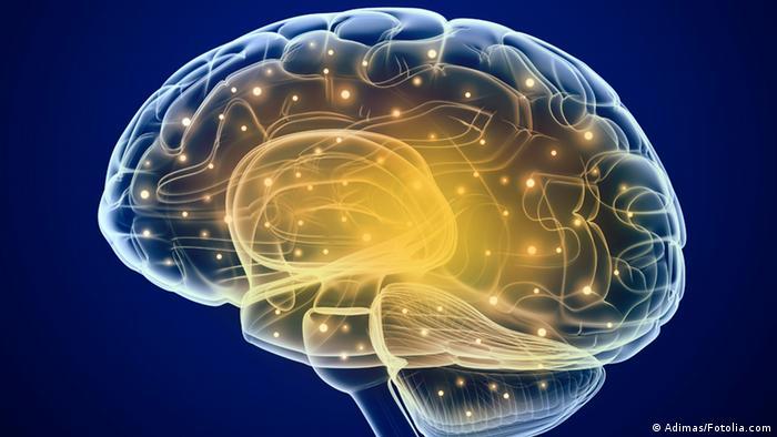 Nervenleitungen im Gehirn: zehn Prozent reichen