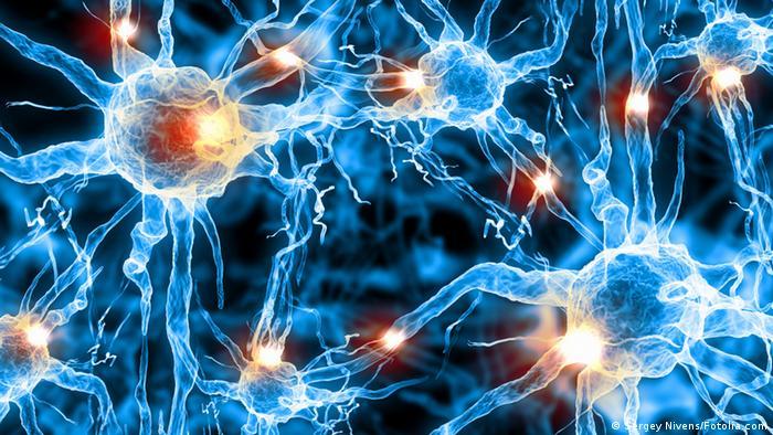 aringan synapse saraf pada otak yang menerima sinyal rangsangan dari kulit