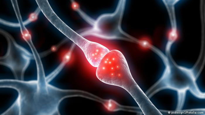 Artistic rendering of human synapses