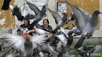 Жени хранят гълъби