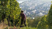 04.10.2014 DW hin & Weg Ueberblick Weinlandschaften 1