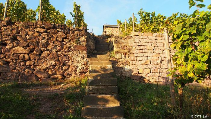 Северные вина Германии - Радебойль