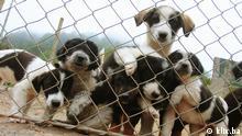 Welttierschutztag Hundeasyl Hunde im Hundeasyl in Prača in Pale, Nähe Sarajevo, Bosnien und Herzegowina. Aufnahmedatum und -ort: September/Oktober 2014; Sarajevo, Bosnien-Herzegowina Bild: klix.ba