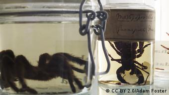 Museumsstücke aus Madagaskar Darwin Centre (Photo: CC BY 2.0/Adam Foster)