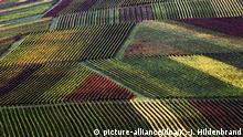 BdT Deutschland Herbstliche Weinberge