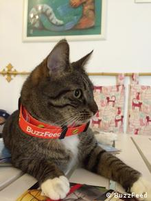 A cat on a table in the cat café where BuzzFeed launched