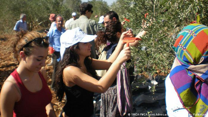 Palästina Olivenernte (YMCA-YWCA Joint Advocacy Initiative (JAI) – Palestine)