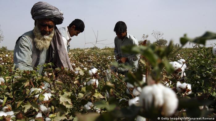 Bildergallarie Baumwolle in Afghanistan