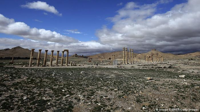 Palmyra oasis Photo: JOSEPH EID/AFP/Getty Images
