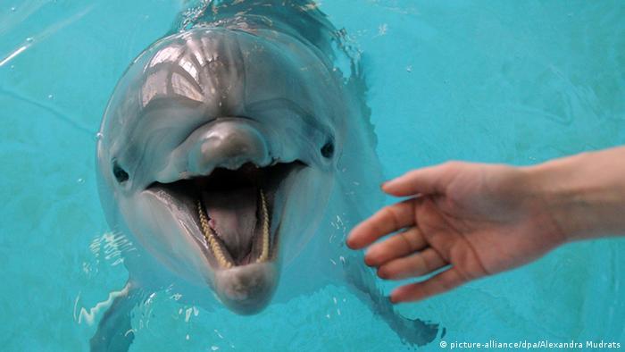 Delphin im Delfinarium in Moskau