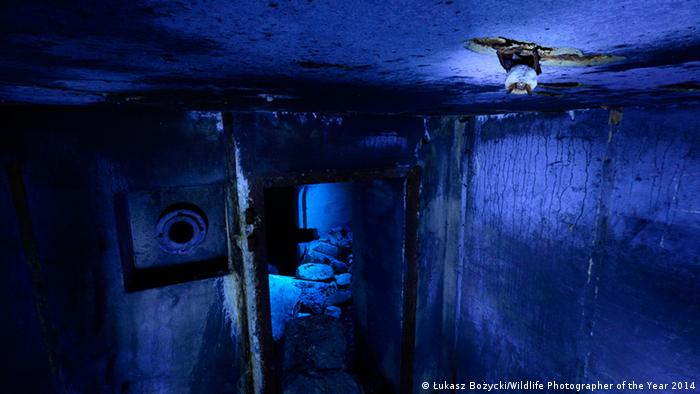 Die Gewinner Wildlife Photographer of the Year 2014