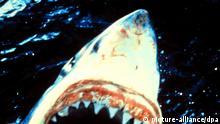Film Der Weiße Hai 1975 EINSCHRÄNKUNG