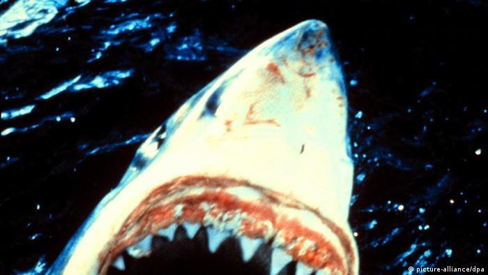 Un tiburón blanco.