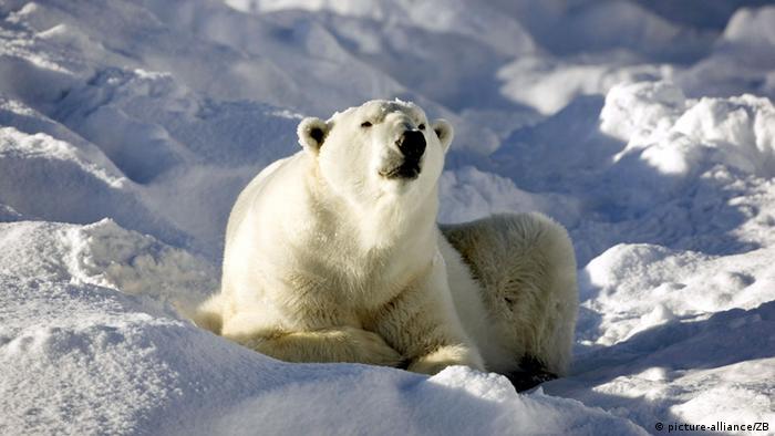 Ein Eisbär liegt im Schnee in der Sonne