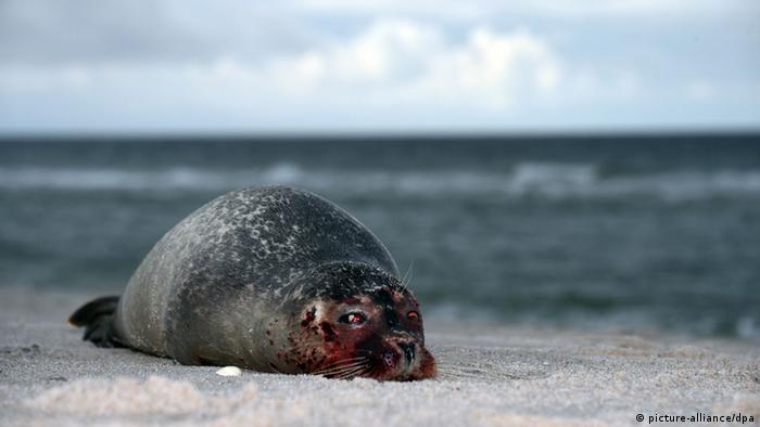 Bildergalerie bedrohte wildlebende Tierarten