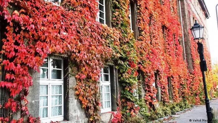 Casa llena de hojas de todos colores.