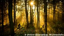 Лес в Нижней Саксонии