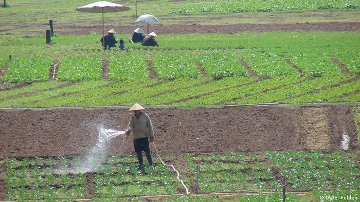 Ein Landwirt in der Nähe der laotischen Hauptstadt Vientiane beim Bewässern seiner Felder (Foto: DW/Esther Felden)