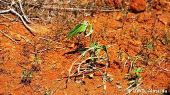 Dürre in Kap Verde