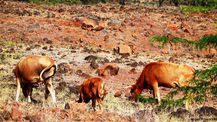 Dürre in Kap Verde (DW/D. Almeida)