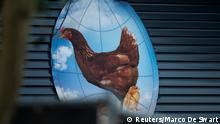 Vogelgrippe auf Geflügelfarm in den Niederlanden ausgebrochen