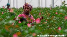 Blumenindustrie in Kenia