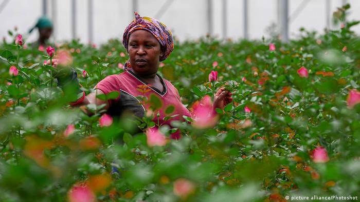 A woman in a greenhouse full of roses