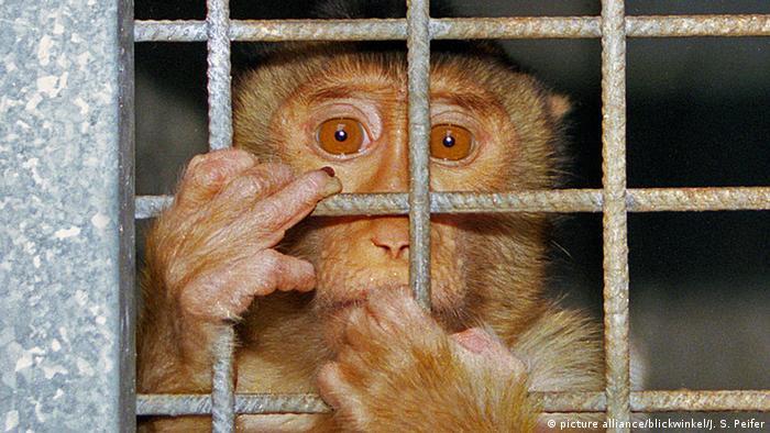 Tierversuche: Geheuchelte Empörung