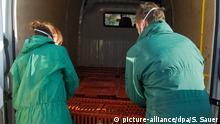 Nach dem Ausbruch der Geflügelpest in einem Mastputenbetrieb in Heinrichswalde im Kreis Vorpommern-Greifswald (Mecklenburg-Vorpommern) werden am 07.11.2014 in einem Sperrbezirk von drei Kilometern um das Dorf rund 1000 Hühner, Enten und Gänse von Privathaltern getötet. Hier wird Geflügel verladen. In dem Bestand des Mastputenbetrieb in Heinrichswalde war erstmals in Europa ein hochpathogenes Influenzavirus vom Subtyp H5N8 festgestellt worden. Foto: Stefan Sauer/dpa +++(c) dpa - Bildfunk+++