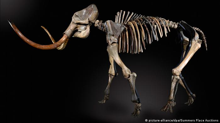 Mammoth skeleton (picture-alliance/dpa/Summers Place Auctions)
