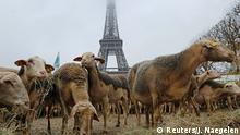 Paris - Schafe am Eifelturm