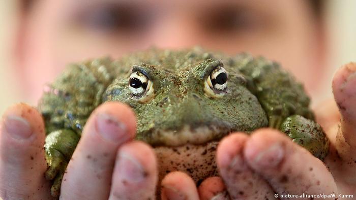 Bildergalerie Frösche Sonderschau Heim Tier Pflanze auf der Grünen Woche