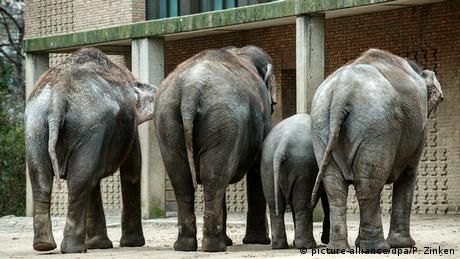 Vier Elefanten im Zoo in Berlin (picture-alliance/dpa/P. Zinken)