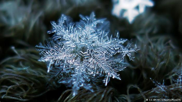 Snowflake: feathery, like the fronds of a fern