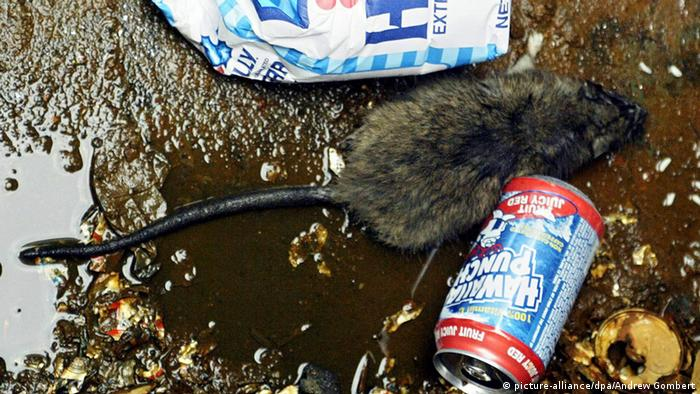 Dead rat in the gutter. (Photo: dpa/Picture Alliance)