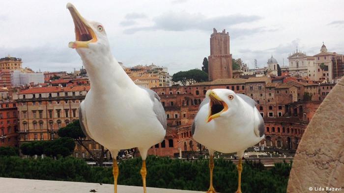 Möwen in Rom