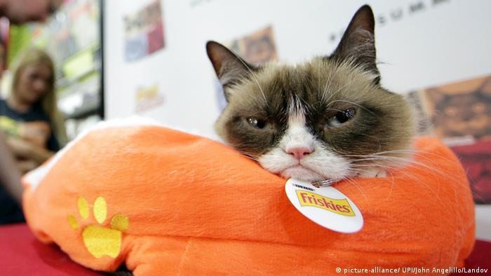 Grumpy Cat (picture-alliance/ UPI/John Angelillo/Landov)