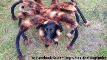 Youtube - Spinnenhund