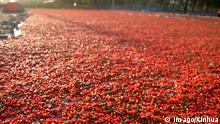 Goji Beeren aus China