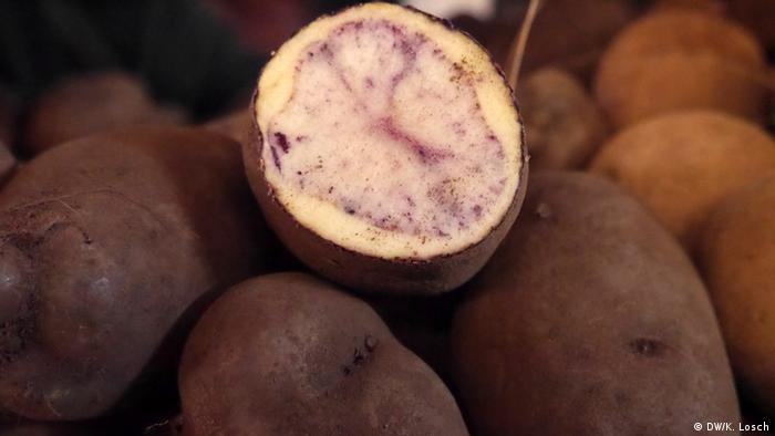 Global Ideas Kartoffel