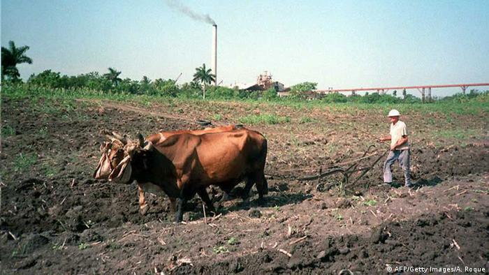 Ein Bauer pflügt ein Feld mit Ochsen