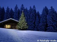 Odakle dolaze božićna drvca?