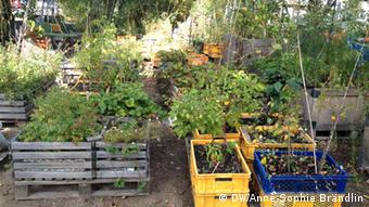 A community garden in Berlin. Copyright: DW/Anne-Sophie Brändlin
