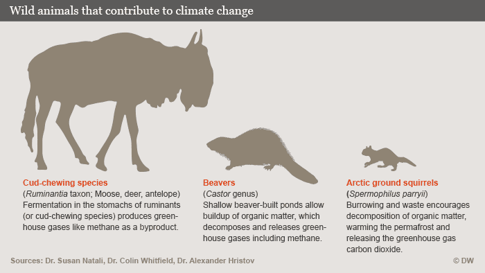 Infographic: wild animal contributions to climate change
