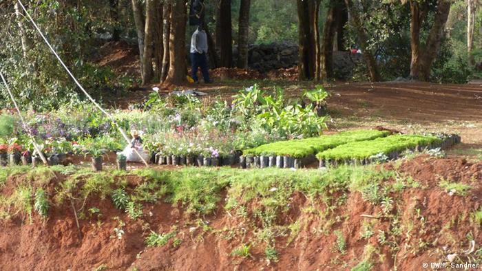 Kenias Green Belt Movement