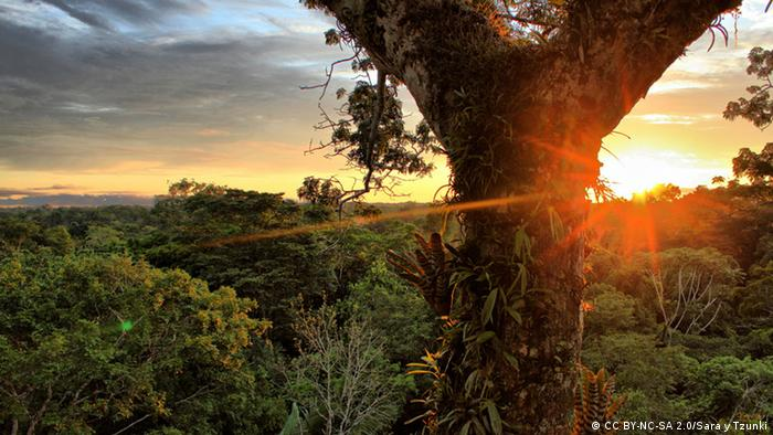Der Yasuni-Nationalpark im ecuadorianischen Amazonasdschungel