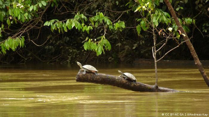 Yasuni National Park in the Ecuadorian Amazon