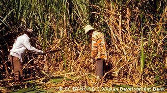 Photo: Workers harvest sugarcane in Fiji (Foto: CC BY-NC-ND 2.0/Asian Development Bank / Quelle: https://www.flickr.com/photos/asiandevelopmentbank/8426513846)