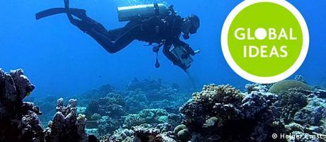 Teaser Korallenriff