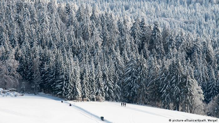Deutschland Wintersport Wintersportgebiet Schnee Bayerischer Wald
